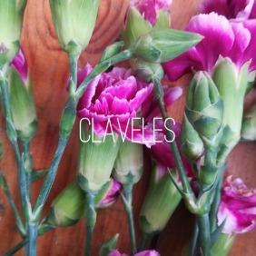 claveles logo