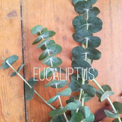 eucaliptus logo